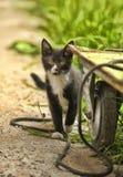 Άστεγο γατάκι στοκ εικόνες