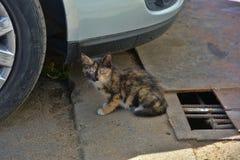 Άστεγο γατάκι στοκ εικόνα με δικαίωμα ελεύθερης χρήσης