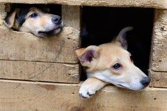 Άστεγο κουτάβι στο σκυλόσπιτο Στοκ φωτογραφίες με δικαίωμα ελεύθερης χρήσης