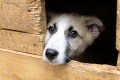 Άστεγο κουτάβι στο σκυλόσπιτο Στοκ εικόνες με δικαίωμα ελεύθερης χρήσης