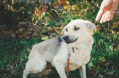 Άστεγο μιγία σκυλί που περιμένει έναν καινούργιο ιδιοκτήτη στοκ εικόνες