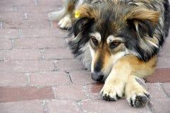Άστεγο σκυλί θλίψης σε μια επίστρωση Στοκ Εικόνες