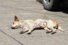 Άστεγο σκυλί στο δρόμο Στοκ Εικόνες