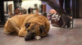 Άστεγο σκυλί Στοκ Εικόνα