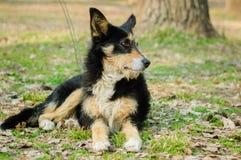 Άστεγο σκυλί Στοκ Εικόνες