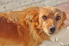 Άστεγο dog& x27 μάτια του s Στοκ εικόνα με δικαίωμα ελεύθερης χρήσης