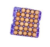 Άσχημο αυγό Στοκ φωτογραφία με δικαίωμα ελεύθερης χρήσης