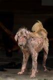άσχημο σκυλί Στοκ εικόνα με δικαίωμα ελεύθερης χρήσης