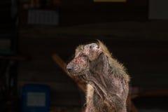 άσχημο σκυλί Στοκ εικόνες με δικαίωμα ελεύθερης χρήσης