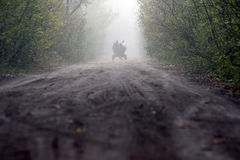 Άτομα που ένα κάρρο σε ένα δάσος Deveselu Στοκ Εικόνες