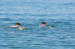 2 άτομα που κολυμπούν στη θάλασσα Στοκ Φωτογραφία