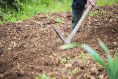 Άτομα που σκάβουν το έδαφος με την αξίνα Στοκ Εικόνες