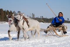 άτομα deers Στοκ εικόνες με δικαίωμα ελεύθερης χρήσης