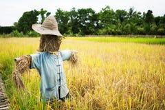 Άτομο αχύρου σκιάχτρων που φρουρεί τους τομείς ρυζιού Στοκ εικόνες με δικαίωμα ελεύθερης χρήσης
