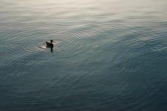 Άτομο η βάρκα και το πανί σας από μόνοι σας στοκ εικόνες