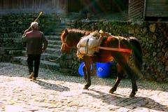Άτομο και άλογο Στοκ Εικόνες