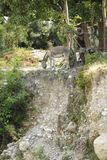 Άτομο και ζώα από έναν απότομο βράχο Στοκ Φωτογραφία