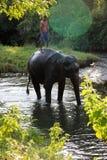 Άτομο και ζώο κύριος υπάλληλος Ελέφαντας με το άτομο Στοκ εικόνες με δικαίωμα ελεύθερης χρήσης