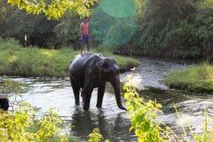 Άτομο και ζώο κύριος υπάλληλος Ελέφαντας με το άτομο Στοκ φωτογραφία με δικαίωμα ελεύθερης χρήσης