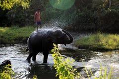 Άτομο και ζώο κύριος υπάλληλος Ελέφαντας με το άτομο Στοκ Φωτογραφία