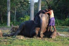 Άτομο και ζώο κύριος υπάλληλος Ελέφαντας με το άτομο Στοκ Εικόνα