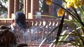 Άτομο και κάψιμο θυμιάματος σε έναν βουδιστικό ναό απόθεμα βίντεο