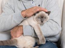 Άτομο και πανέμορφη γάτα κατοικίδιων ζώων Στοκ φωτογραφία με δικαίωμα ελεύθερης χρήσης