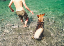Άτομο και σκυλί που εισάγονται στα νερά Στοκ Εικόνες