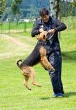 Άτομο και σκυλί Στοκ εικόνα με δικαίωμα ελεύθερης χρήσης
