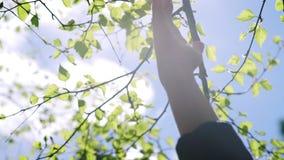 Άτομο και φύση: χέρια ενάντια στη φύση άνοιξη Φωτεινός ήλιος και σαφής ουρανός απόθεμα βίντεο