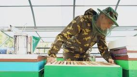 Άτομο μελισσοκόμων που ελέγχει το ξύλινο πλαίσιο πρίν συγκομίζει το μέλι στο μελισσουργείο Στοκ Εικόνες