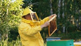 Άτομο μελισσοκόμων που ελέγχει το ξύλινο πλαίσιο πρίν συγκομίζει το μέλι στο μελισσουργείο Στοκ εικόνες με δικαίωμα ελεύθερης χρήσης