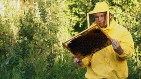 Άτομο μελισσοκόμων που ελέγχει το ξύλινο πλαίσιο πρίν συγκομίζει το μέλι στο μελισσουργείο Στοκ φωτογραφία με δικαίωμα ελεύθερης χρήσης