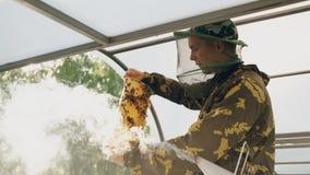 Άτομο μελισσοκόμων που ελέγχει το ξύλινο πλαίσιο πρίν συγκομίζει το μέλι στο μελισσουργείο Στοκ Φωτογραφία