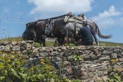 Άτομο με τα άλογα βουνών του στην καλύβα Eho Τα άλογα χρησιμεύουν να μεταφέρουν τις προμήθειες από και στην καλύβα στοκ φωτογραφία