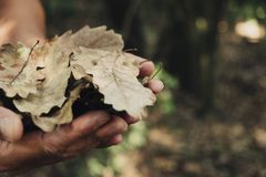 Άτομο με τα ξηρά φύλλα στα χέρια του στοκ φωτογραφία με δικαίωμα ελεύθερης χρήσης