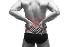 Άτομο με τον πόνο στην πλάτη αρσενικό σωμάτων μυϊκό Όμορφη τοποθέτηση bodybuilder στο στούντιο Απομονωμένος στο άσπρο υπόβαθρο με Στοκ φωτογραφία με δικαίωμα ελεύθερης χρήσης