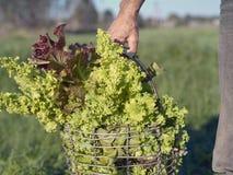 Άτομο με το καλάθι λαχανικών Στοκ Φωτογραφίες