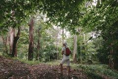 Άτομο με το σακίδιο πλάτης που περπατά στο δάσος στοκ φωτογραφία με δικαίωμα ελεύθερης χρήσης
