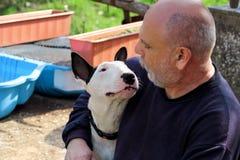 Άτομο με το σκυλί Αγγλικό άσπρο σκυλί τεριέ του Bull στην επιχείρηση με τη συνεδρίαση και την απόλαυση ιδιοκτητών του στο υπαίθρι Στοκ Εικόνες