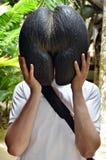 Άτομο με Lodoicea ή coco de mer Σεϋχέλλες στοκ φωτογραφίες με δικαίωμα ελεύθερης χρήσης