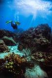 Άτομο που βουτά κατά μήκος της κοραλλιογενούς υφάλου υποβρύχιας koh στο tao, Ταϊλάνδη στοκ εικόνες