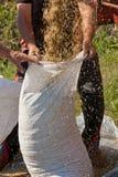 Άτομο που γεμίζει το σάκο με τα δημητριακά στοκ εικόνα