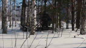 Άτομο που ελίσσεται στο μίνι όχημα για το χιόνι βαθιά snowdrifts στο δάσος μεταξύ των δέντρων φιλμ μικρού μήκους