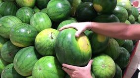 Άτομο που επιλέγει ένα φρέσκο οργανικό καρπούζι στην υπεραγορά αγροτών απόθεμα βίντεο