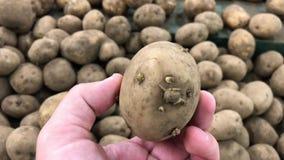Άτομο που επιλέγει τις ακατέργαστες αγροτικές οργανικές πατάτες στην υπεραγορά Ασία, Ινδονησία φιλμ μικρού μήκους