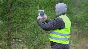 Άτομο που εργάζεται με το PC ταμπλετών κοντά στις ερυθρελάτες στο δάσος απόθεμα βίντεο
