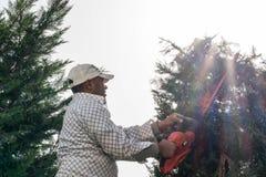 Άτομο που εργάζεται στον κήπο που κόβει τα δέντρα Στοκ Φωτογραφίες
