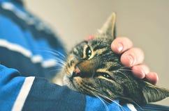 Άτομο που κρατά την γκρίζα γάτα Στοκ φωτογραφία με δικαίωμα ελεύθερης χρήσης