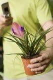 Άτομο που κρατά το εξωτικά σε δοχείο φυτό και το τηλέφωνο Στοκ φωτογραφία με δικαίωμα ελεύθερης χρήσης